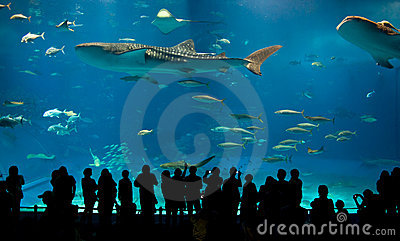 Le plus grand aquarium acrylique du monde image stock for Achat grand aquarium