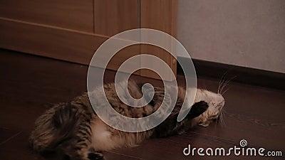 chat x sans inscription forest