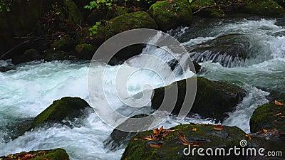 Le ruisseau de montagne Clear Oirase coule rapidement les roches recouvertes de mousse verte et les feuilles de feuillage colorée banque de vidéos