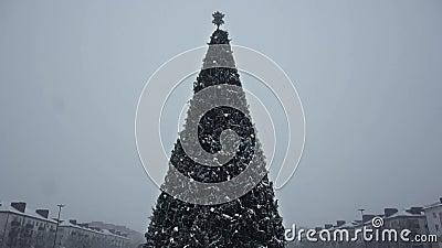 Le sapin de Noël est en chute de neige et le blizzard dans l'après-midi Nouvel an`s Eve en ville Hiver Concept de début de banque de vidéos