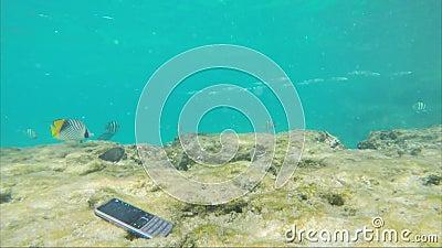 Le smartphone se noie dans l'eau de mer autour des poissons de natation Absence de technologie clips vidéos