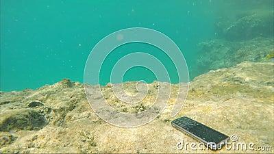 Le smartphone se noie dans l'eau de mer autour des poissons de natation Absence de technologie banque de vidéos