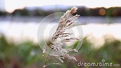 Le strade della Reed nel vento video d archivio