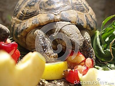 Lea s turtle