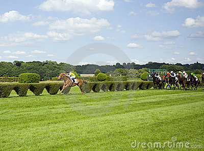 In the lead - winning gallop horse
