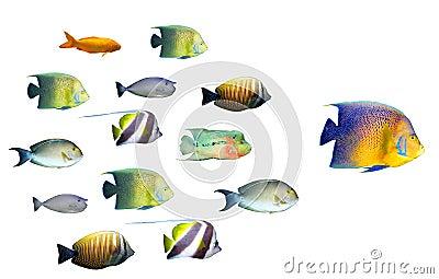 Leadership concept - big fish leading