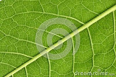 Leafåder stänger sig upp