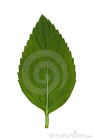 Free Leaf 1 Stock Images - 2807654