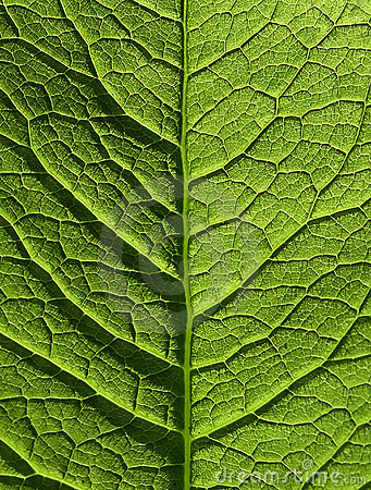 Free Leaf Stock Photos - 152073