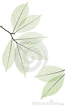 Free Leaf Stock Photography - 3776272