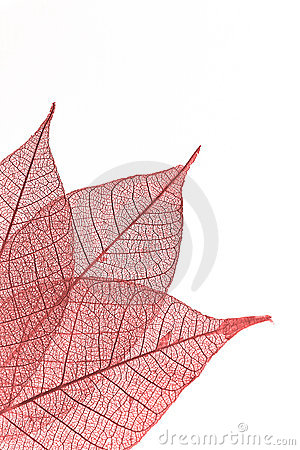 Free Leaf Stock Images - 4532854