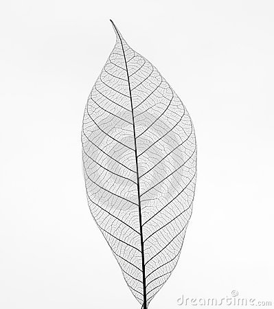 Free Leaf Royalty Free Stock Photo - 7314575