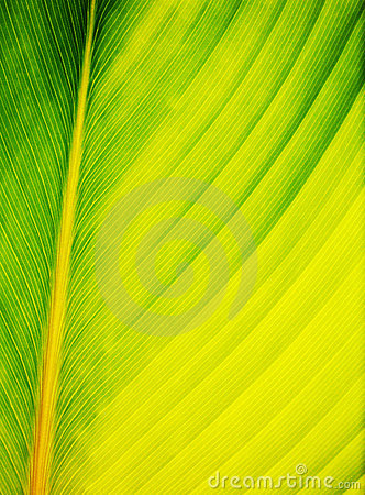 Free Leaf Abstract Close Up Royalty Free Stock Image - 4994096