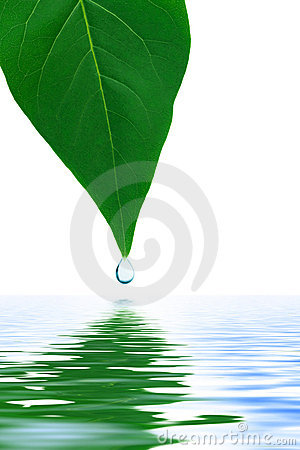 Free Leaf And Water Drop Stock Photos - 10545523