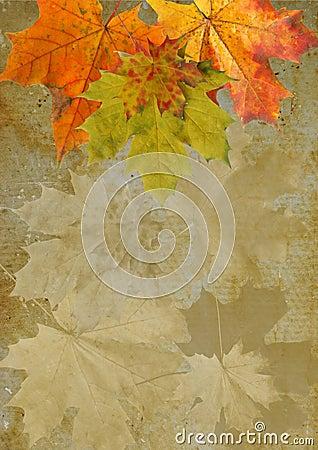 Leaf autumn maple  grunge