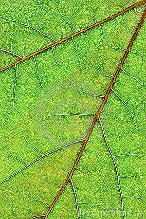 Leaf background vertical