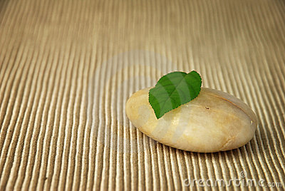 Leaf balanced on Stone.