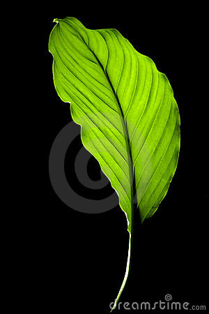 Leaf on black background