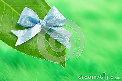 Leaf with blue ribon