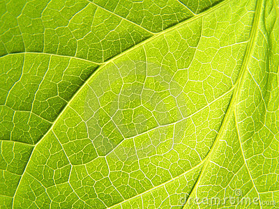 Leaf: Close up