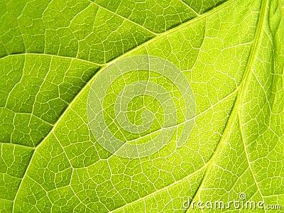 Leaf: Close up
