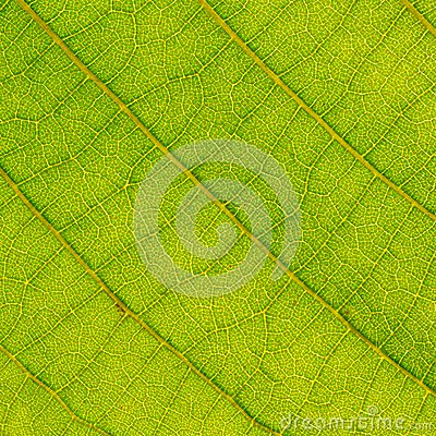 Leaf close up