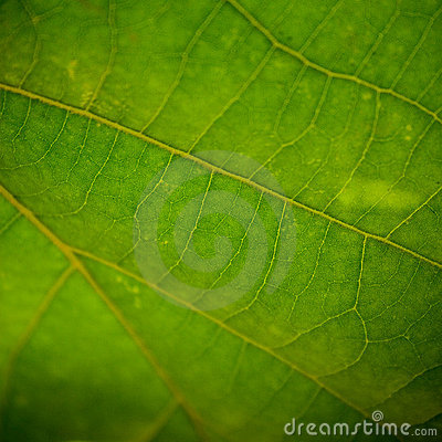 Free Leaf Closeup Stock Images - 5317124