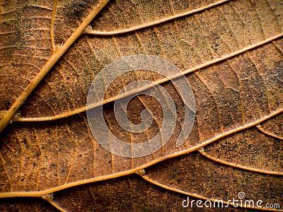 Leaf closeup nature detail