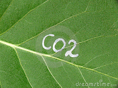 Leaf and CO2