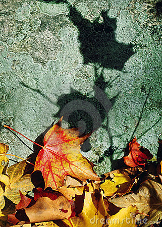 Leaf Color and Shadows