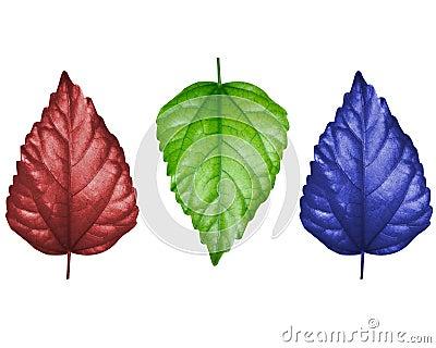 Leaf concept