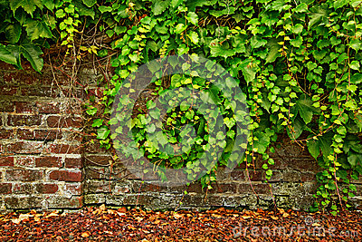 Leaf covered old brick wall