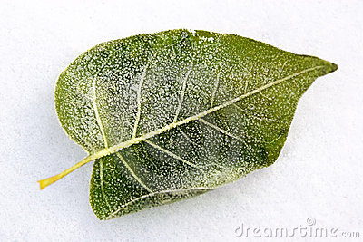 Leaf covered by winter treasures