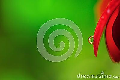Leaf with crystal raindrop