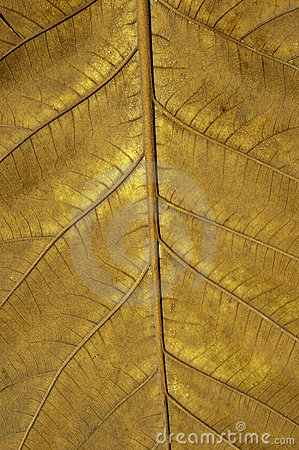 Free Leaf Detail Royalty Free Stock Photography - 15164237