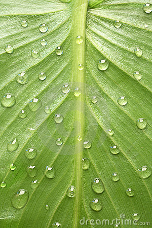 leaf with dew drop design