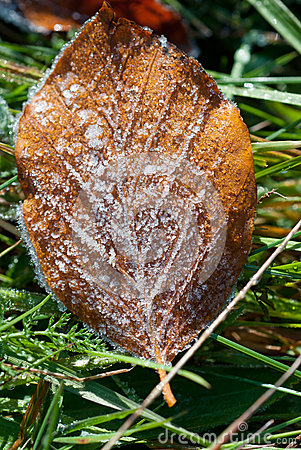 Leaf with dew months