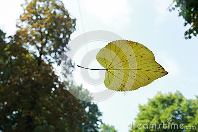 Leaf on dirty window. Autumn 2015 Stock Photo