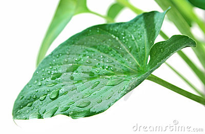 Leaf in drop dew