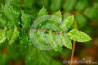 Leaf & drops