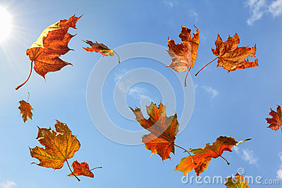 Leaf Fall in Sunny Day