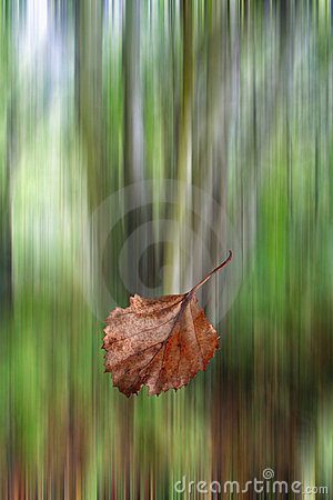 Leaf falling in autumn