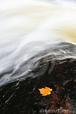 Leaf floating in river