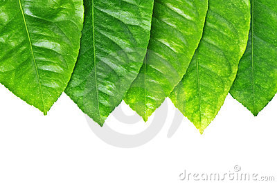 Leaf_frame