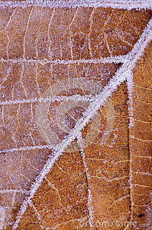 Leaf with frost pattern