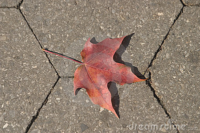 Leaf on the ground
