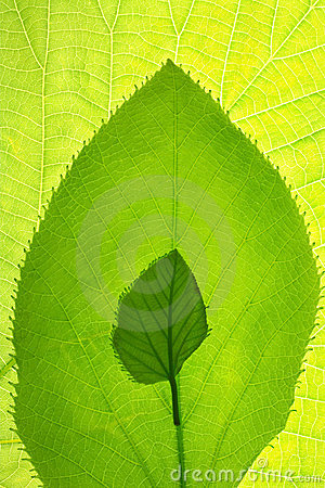 Free Leaf Growth Patterned Design Royalty Free Stock Image - 3992116
