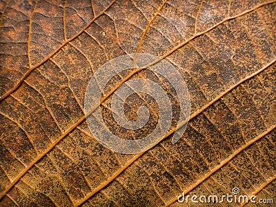 Leaf grunge texture