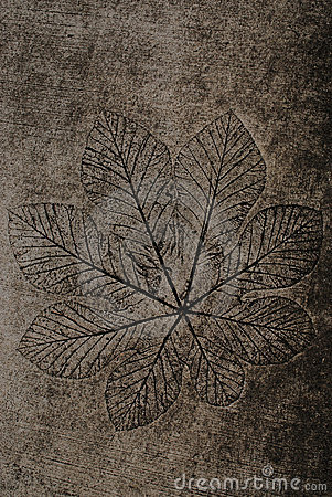 Leaf imprinted onto cement ground