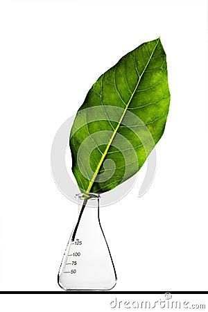 Leaf inside a flask